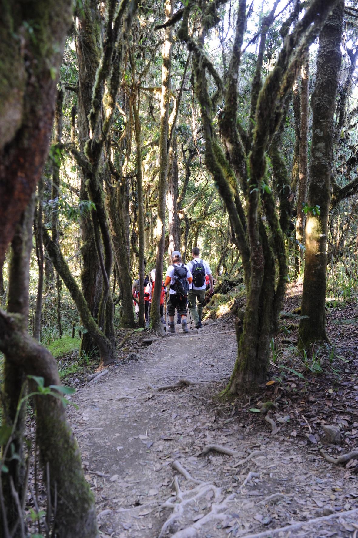 kilimanjaro-vandring-nedat